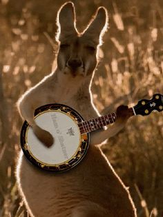YES YES!!!!! nothing better than a kangaroo playing the banjo. YES!!!!!!