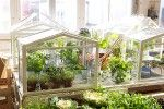 IKEA's New Mini Greenhouse Lets Anyone Create Their Own Indoor Garden | Inhabitat - Sustainable Design Innovation, Eco Architecture, Green Building