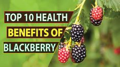 Top 10 health benefits of Blackberry Amazing Benefits of Health, Skin and Hair 10 News, Blackberry, Health Benefits, Top, Blackberries, Rich Brunette, Crop Shirt, Shirts