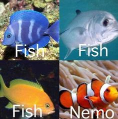 "Every time I see a clownfish I yell Nemo! But everything else is just ""fish"""