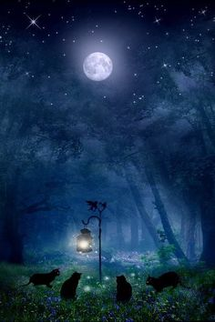 ❥ fireflies, moonlight, starlight~ a magical night indeed