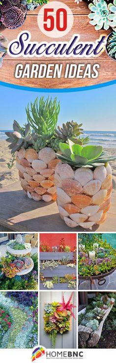 Best designs for succulent gardening