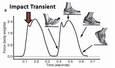 Heel-striking generates an impact force 3x's the body's mass causing a wide range of running injuries http://runforefoot.com/heel-strike-running-produces-an-impact-force-linked-to-stress-fractures/