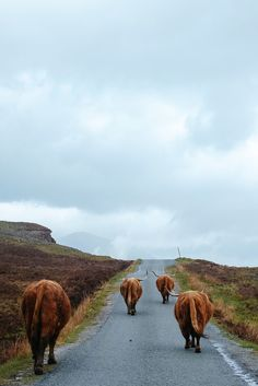 Isle of Skye... and they're off ... ༺