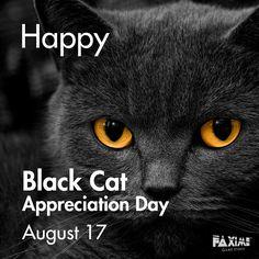 August 17 - Black Cat Appreciation Day