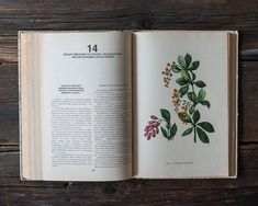 Vintage Illustrated Botanical Book  Vintage Plant