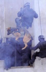 Military War K9 Rappelling with fellow Soldiers - Heroes & may God Bless you!