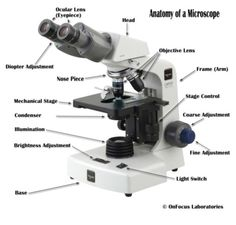 Compound light microscope diagram mad scientist pinterest microscope ccuart Gallery
