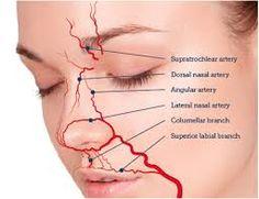 「lip vascular anatomy」的圖片搜尋結果