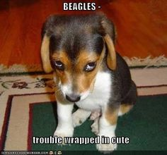 funny beagle pictures for facebook | Recaption See All Captions