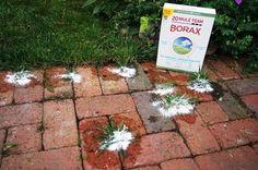 Unbelievable Borax Uses in the Garden 2