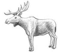 Simple Animal Drawings in Pencil Easy