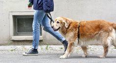 Ihr wollt das Thema Leinenführigkeit mit Eurem Hund angehen und benötigt für Euer Training noch Tipps? Schaut in unserem Hunde Blog vorbei!