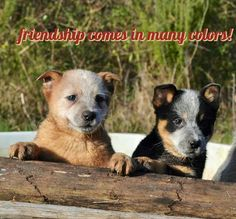 friendship comes in many colors!