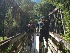 Old Coach Road trail, near Ohakune, NZ