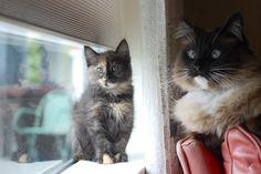 Kitten and cat.