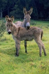 How to raise a donkey. also some good tips on how to pick a donkey.