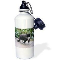 3dRose Black and White Kitten on a Prowl, Sports Water Bottle, 21oz