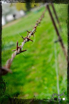 Barb Wire Closeup.