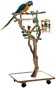 Recently shared diy parrot perches and play stands ideas & diy parrot perches and play stands pictures Parrot Perch Diy, Diy Parrot Toys, Parrot Pet, Parrot Bird, Bird Perch, Bird Cage Stand, Pet Bird Cage, Parrot Play Stand, Amazon Parrot