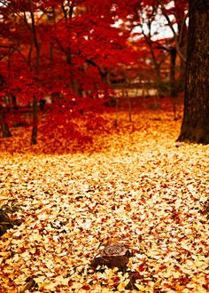 Kyoto in autumn, Japan
