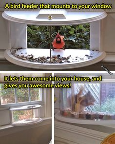 This Unique Bird Feeder Brings Birds and Squirrels Partially Into Your House. A bird feeder that mounts to your window and lets them come into your houes and gives you awesome views of the birds and squirrels!