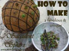 How to Make a Fabulous, Unique Succulent Sphere