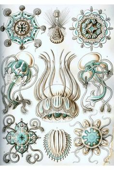 Items similar to Ernst Haeckel Jellyfish artwork century Wildlife art Paleontology artwork Zoology art History of science poster on Etsy Hd Vintage, Vintage Prints, Antique Prints, Vintage Posters, Illustration Botanique, Botanical Illustration, Ernst Haeckel Art, Art Nouveau, Art Deco