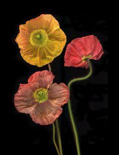 warm flowers
