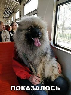 Ich habe heute ein Werwolf in der S-Bahn getroffen… Funny Fails, Funny Dogs, Funny Animals, Cute Animals, Funny Memes, Jokes, Funny Videos, Tierischer Humor, What Goes On