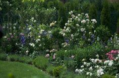 Jedna z moich ulubionych róż - Eden Rose opleciona wokół kutego filaru, wykonanego przez znajomego kowala