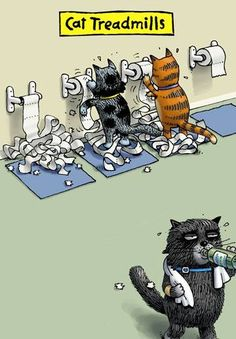 Cat Treadmills Funny Blank Card - Greeting Cards - Hallmark Most Popular Memes, Best Memes, Hilarious, Funny Memes, Funny Videos, Funny Cats, Funny Animals, Treadmills, The Funny