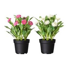 FEJKA Artificial potted plant, Common daisy assorted colors - IKEA