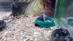 Have fun with Wag Pets🐾 – christoph bork Have fun with Wag Pets🐾 Funny jungar dwarf hamsters Cute Little Animals, Cute Funny Animals, Cute Animal Videos, Funny Animal Pictures, Hamster Gif, Funny Cute Memes, Funny Quotes, Fun Funny, Funny Stuff