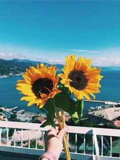 Flowers photography sunflowers happy Ideas for 2019 Vsco Pictures, Nature Pictures, Beautiful Pictures, Amazing Flowers, Beautiful Flowers, Sunflower Wallpaper, Summer Pictures, Mellow Yellow, Aesthetic Pictures