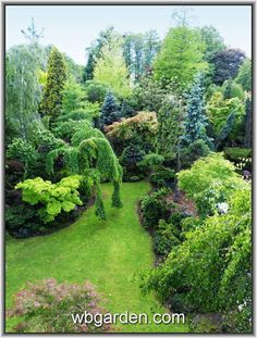 Organic Gardening Near Me Landscaping Shrubs, Garden Shrubs, Deciduous Trees, Trees And Shrubs, Amazing Gardens, Beautiful Gardens, Landscape Design, Garden Design, Evergreen Garden