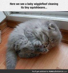 Wigglefloof cleaning squishbeans.