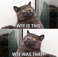 WTF CAT!!