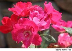 Ayurvedic Products, Bulgarian, Flowers, Plants, Shop, Diy, Bulgarian Language, Bricolage