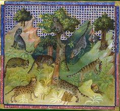 Le livre de chasse, folio 36   du chat et de toute sa nature
