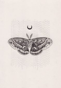 Lunar moth by Peter Carrington