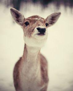 Cute baby deer in winter by NakedEyePhoto,