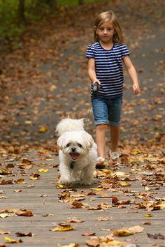 Small Girl walking her Dog (Shih Tzu) Shih Tzu, Photography Photos, Walking, Stock Photos, Explore, Dogs, Animals, Image, Animales
