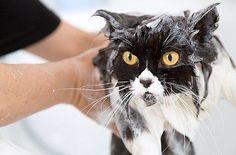 How To Bathe A Cat | eBay