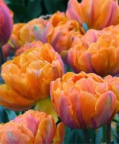 The French Tangerine: ~ spring cheer