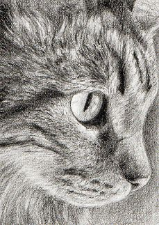 """""""Cats are mysterious kind of  folk.  There is more passing their minds than we are aware."""" --Sir Walter Scott"""