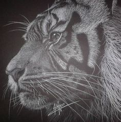 Thoughtful Tiger by TetriTekArt - white color pencil on black paper