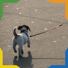 Algunos consejos para pasear a tu perro adecuadamente:  Asegura correctamente la correa. Lleva bolsas biodegradables para recoger sus heces.  Nunca descuides a tu mascota.  Si no está entrenado para estar sin correa no permitas que se aleje de ti.  No tires de la correa, puedes ocasionar daños en su cuello.  Permite que socialice con otros perros.