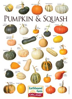 Alternative Gardning: Pumpkin & Squash Varieties Chart Gardening,Gardening-Tips and Techniques, Organic Gardening, Gardening Tips, Pumpkin Squash, Roast Pumpkin, Cuisine Diverse, Squashes, Food Charts, Autumn Garden, Autumn Fall