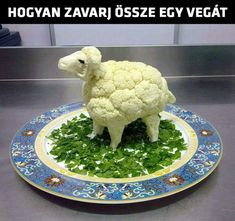 Find out how to confuse a vegan or a vegetarian. Once you see this you might want to try this out on any vegan or vegetarian friends you have! Best Funny Images, Super Funny Pictures, Super Funny Quotes, Funny Quotes About Life, Funny Animal Pictures, Funny Animals, Funny Life, Life Quotes, Funny Laugh